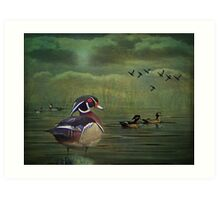 Wood Ducks on the Lake Art Print