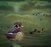 Wood Ducks on the Lake by swaby