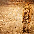 Save Tiger by Vipul Shah