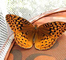 Aphrodite Butterfly by ack1128