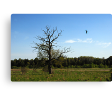 Lonely oak in spring time Canvas Print