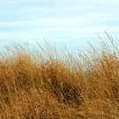 Jersey Beach Grass by Chinita128