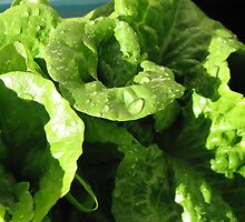 Home grown butter lettuce by LindaSnaps