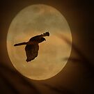 hawk and moon by mikepemberton