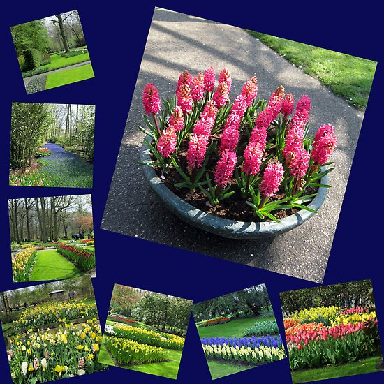Keukenhof Collage featuring Pink Hyacinths by BlueMoonRose