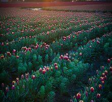 Mount Vernon Morning by Inge Johnsson