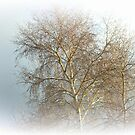 Winters Misty Dream by Kerry  Hill