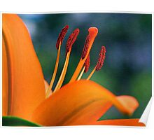 Hibiscus On Canvas  Poster