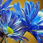 Blue Flower by musicguy2341