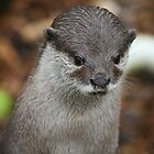 Otter at Longleat by ellismorleyphto