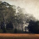 Yarramalong Autum morning by ozzzywoman