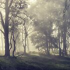 Yarramalong Autumn morning 3 by ozzzywoman