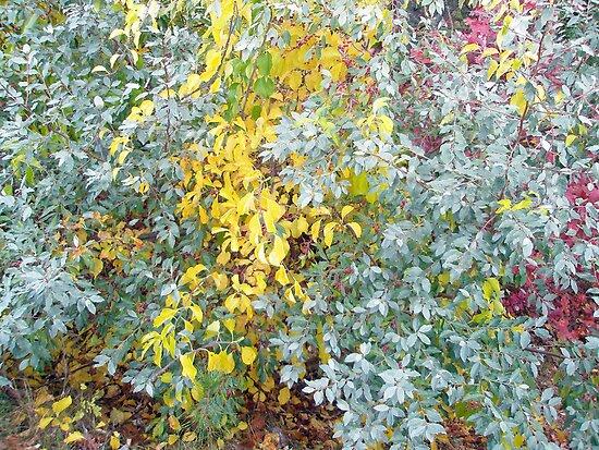 Autumn Foliage Cascade by MotherNature