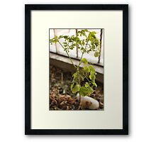 A Packet of Life Framed Print