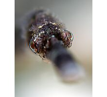 Pipefish Portrait Photographic Print