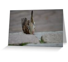 the famous up-side-down sparrow Greeting Card