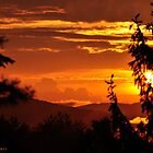 Spruce Silhouette on Gilt Sunset by Caleb Ward