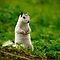 white squirrel by J.K. York
