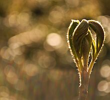 Bathed in sunshine by Mark Williams