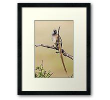 Mousebird Framed Print