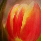Tulip by AD-DESIGN
