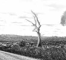 Variations #3 -  Somewhere Near Oberon, NSW - THe HDR Experience by Philip Johnson