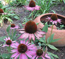 Coneflower and Terra Cotta Pot by kgarrahan