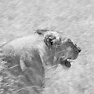 Stalker-Kenya by Pascal Lee (LIPF)
