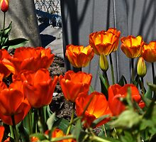 Flaming Tulips by MarianBendeth