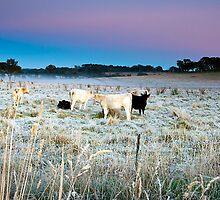 Cold Frosty Morning Near Carcoar in NSW by Jennifer Bailey