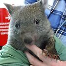 Lulu another rescued wombat baby (Joey) by Ron Co