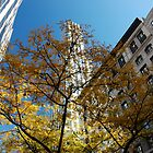 Autumn in New York by Magdalena Warmuz-Dent