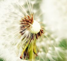 Dandelion 4 by Falko Follert
