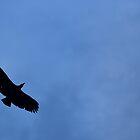 Hawk Silhouette by Mc240