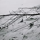 fallen tree branch &amp; shadow by Nancy Miller