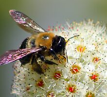 Spring Bee by Richard Skoropat