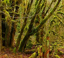 Moss-draped Forest by Elaine Bawden