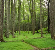 A Woodland Path in Cades Cove by Randall Nyhof