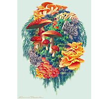 Fungus Amongus Photographic Print