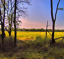 Morning Field by aprilann