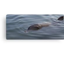 Bottlenose Dolphin - Monkey Mia - WA Canvas Print