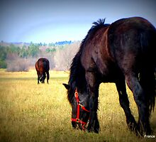 Horses at the Ranch by francelal