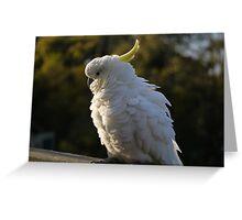 Australian Cockatoo Greeting Card