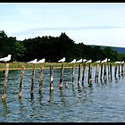 Birds on Poles by WillFrost