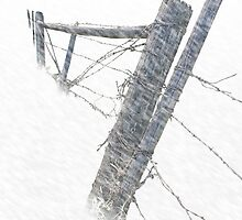 Barbed Wire Fence in a Snow Storm  by Randall Nyhof