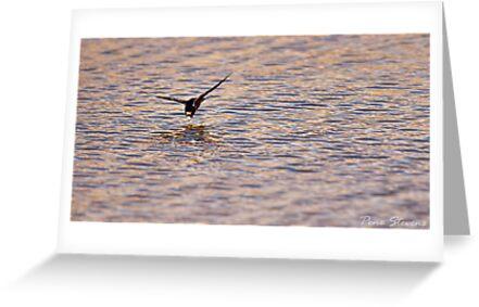 Swallow Dive by Pene Stevens