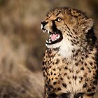 Cheetah Cub by muzy