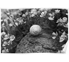 Snail Poster