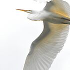 Egret Egress iPhone Case by Jeff Johannsen