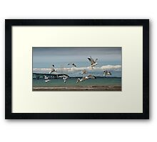 A Flock of Gulls by the Straits of Mackinac between Lake Michigan and Lake Huron Framed Print